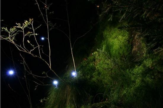 Forest-jpg